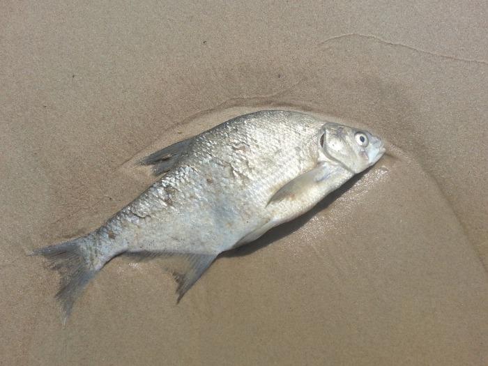 fish-1114988_960_720